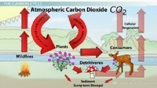 The Carbon Cycle and Long-Term Carbon Storage - Free Intro to Biology Video | Ecosystems | Scoop.it