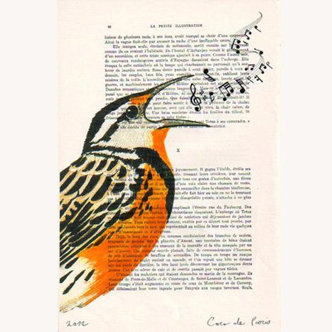 Birdify : Le digital au service de l'environnement ?   COMMUNITY MANAGEMENT & SOCIAL MEDIA   Scoop.it