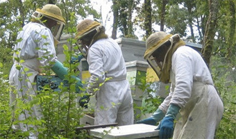 Le stage d'apicultureglobal | Apis apiculture - des formations en apiculture et des infos apiculturelles | Scoop.it