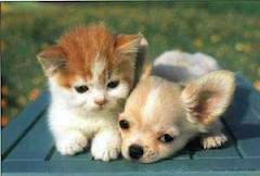 hond en kat   KAP1A7Lara   Scoop.it