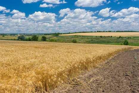 La fertilité des sols part en poussière | Veille développement durable | Scoop.it