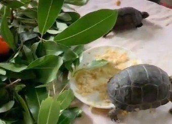 86 Years Old Real-Life Robinson Crusoe Creates Tortoise Sanctuary on Private Island | Vertical Farm - Food Factory | Scoop.it