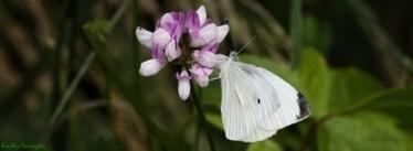 Enjoying Nectar | Bradley Howington's Blog | NWCU Creative Collusion | Scoop.it