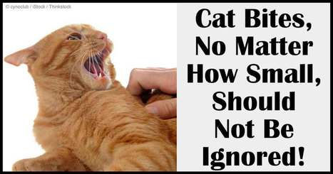 Why Cat Bites Should Not Be Ignored | Pet Sitter Picks | Scoop.it