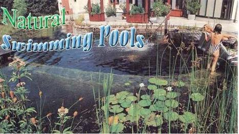 How to Build a Natural Swimming Pool | Sustarchitectecture | Scoop.it
