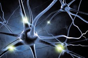 Global investors take interest in Finnish neuroscience - therapidnews.com | Finland | Scoop.it
