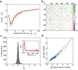 Stimulus-dependent Maximum Entropy Models of Neural Population Codes | Social Foraging | Scoop.it