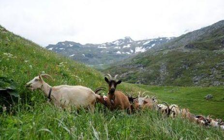 Le fromage charolais reconnu comme produit de terroir par l'UE | thevoiceofcheese | Scoop.it