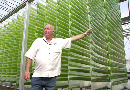 Algae Fuel Solutions for the Energy Crisis - Green Technology World | Energy crisis in Australia | Scoop.it
