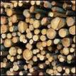 Forestry employment must be regulated now - Scoop.co.nz (press release) | OHS: Puni Tairea | Scoop.it