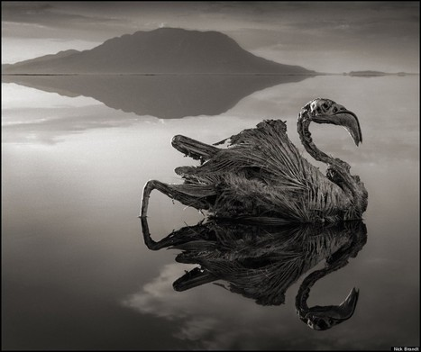 This Lake In Tanzania Has A Deadly Secret. These Shocking Photos Show The Haunting Reality. | Curiosità e non solo! | Scoop.it