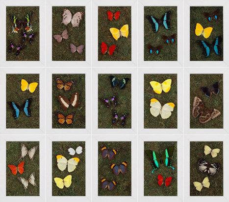Entomology Art Collection: Beach Decor, Coastal Home Decor, Nautical Decor, Tropical Island Decor & Beach Cottage Furnishings | Pretty Beach-themed Decors | Scoop.it