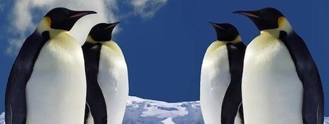 Saber curioso: Hace 10 millones de años abundaban los pingüinos en África | Siempre humanismo | Scoop.it