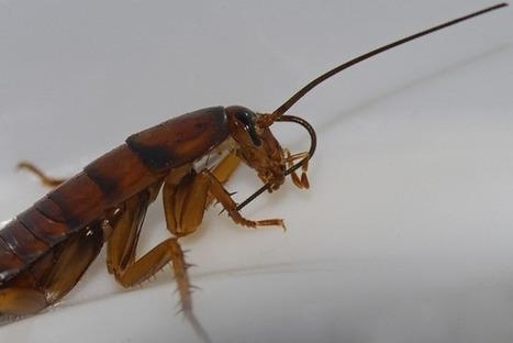 Les insectes nettoient constamment leurs antennes pour affûter leur odorat | EntomoNews | Scoop.it