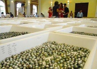Déjà 142 millions de Fcfp de perles achetées | Océanie | Scoop.it