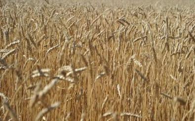 Le prix de certains aliments pourrait augmenter à la rentrée - RTL.fr | Actualité de l'Industrie Agroalimentaire | agro-media.fr | Scoop.it