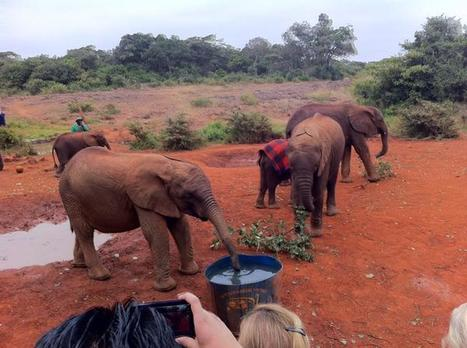 Baby elephants and the power of clean water | The Blog's Revue by OlivierSC | Scoop.it