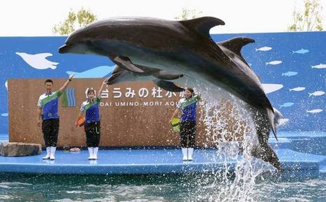 Mie University aims to develop dolphin-breeding technology | The Japan Times | Some Things Japanese | Scoop.it