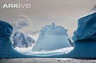 Antarctic | ARKive | Antarctica: environmental impacts | Scoop.it