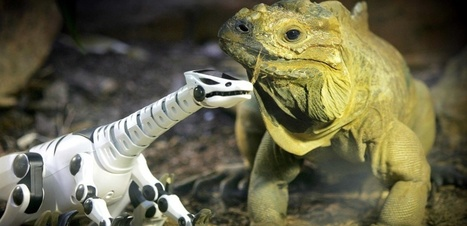 Les animaux de compagnie robotiques : un futur plaisant ? - Sciences et Avenir | Mr. Animo | Scoop.it