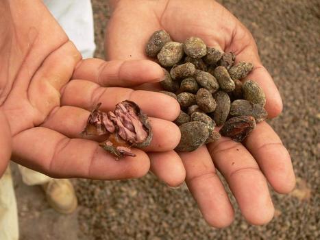 Nicaragua: Productores movilizados en defensa de las semillas criollas y la biodiversidad   Am@sandos   Semillas Criollas en Nicaragua   Scoop.it