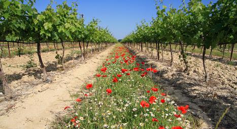 Les avantages de l'agriculture biodynamique face au biologique ... | Le Vin et + encore | Scoop.it