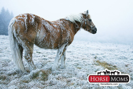 How To Keep Your Horse Warm In The Cold Winter Months | Horse Care | Scoop.it