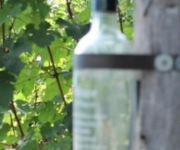 Bottoms up! Vivino uncorks $10.3m in follow-on funding to grow its wine-scanner app globally | Vitabella Wine Daily Gossip | Scoop.it