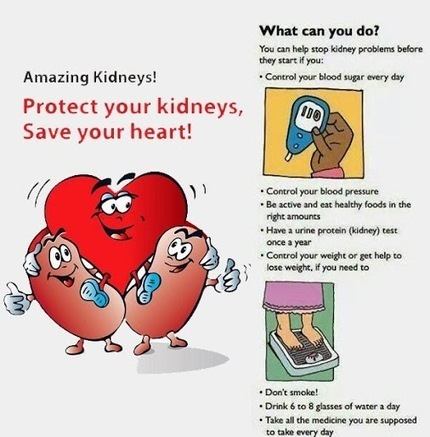 Dr. Manu Gupta- Urologist – Google+ - Your kidneys act as intelligent filters, their main… | Dr. Manu Gupta | Scoop.it