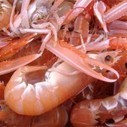 Norway lobster landings plummet | Aquaculture Directory | Aquaculture Directory | Scoop.it
