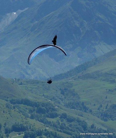 Le ballet du vautour et du parapentiste  | Facebook | Vallée d'Aure - Pyrénées | Scoop.it
