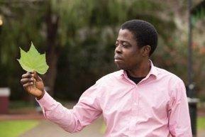 Software recognises plant species via leaf photos | Plant Pathology | Scoop.it