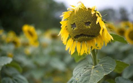 Pesticides : le ras-le-bol des apiculteurs - LaDépêche.fr | # Uzac chien  indigné | Scoop.it