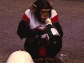 Monkeys Show Alcohol May Boost Your Immune System | Quite Interesting News | Scoop.it
