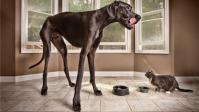 Voici Zeus, le plus grand chien du monde! | Edenzo - L'information et l'actualité des chiens et chats | Edenzo.com | Scoop.it