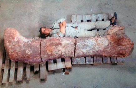 Fossils of 'largest' dinosaur found in Argentina   Geology   Scoop.it
