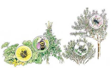 How to Attract Native Bees to Your Organic Garden - Organic Gardening - MOTHER EARTH NEWS | Gardening | Scoop.it