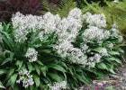 RNZIH - Horticulture Pages - Image gallery of New Zealand plants 1 | Small Urban Gardens | Scoop.it