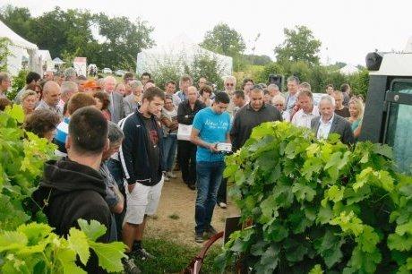 La vigne se met au bio | Agriculture en Dordogne | Scoop.it