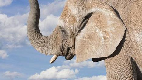 Elephants can hear the sound of approaching clouds | Transcalar Imaginary | Scoop.it