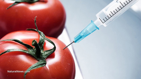Monsanto's fraudulent tomato patent revoked by patent office   Plant Based Transitions   Scoop.it