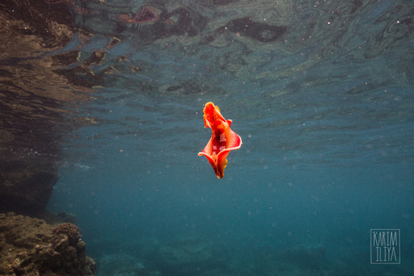Exploring Lanai's Wild Side | Travel Tips + Tales | Scoop.it