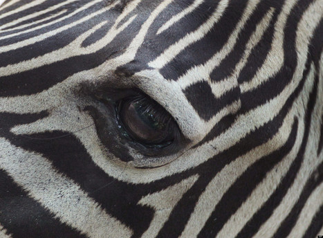 Zebras, Baby Elephants, Giraffes And More Animal Photos | Xposed | Scoop.it