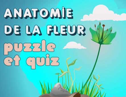 Jeu éducatif : apprendre l'anatomie de la fleur | Conny - Français | Scoop.it