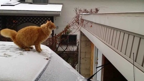 Waffles the Cat Tries & Fails to Jump off a Snow-Covered Car   I Just Love Cats   Scoop.it