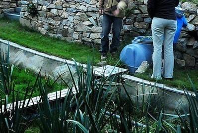 A l'Ecocum, les plantes filtrent les eaux usées - Loperhet | Ma maison | Scoop.it