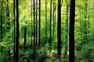 Changement climatique : 4 bonnes raisons de préserver la biodiversité | Les colocs du jardin | Scoop.it