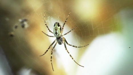 Spider lessons: How to mend your body with silk   Science & technology   Scoop.it
