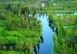 Xochimilco y la hidroponia   Aquí es Queretaro   Cultivos Hidropónicos   Scoop.it