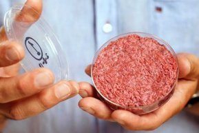 Scientists serve world's first test tube burger - ABC News (Australian Broadcasting Corporation) | Test tube meat patty | Scoop.it